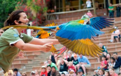 Bird's Shows